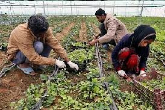 پرداخت بیش از ۳ میلیارد ریال تسهیلات اشتغال روستایی در خوزستان