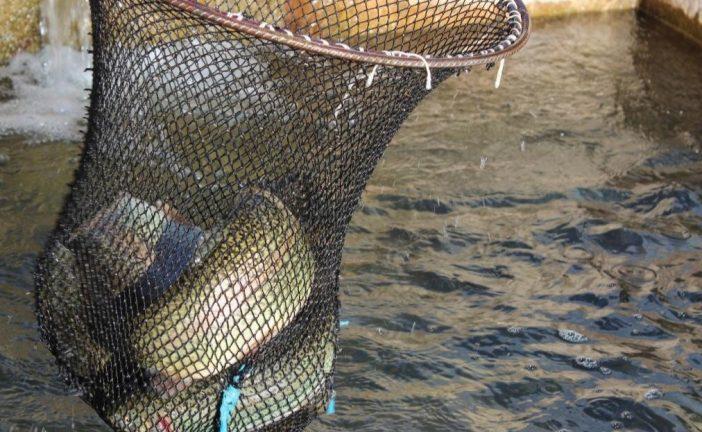 فعالیت حوضچه پرورش ماهی شیوند متوقف شد